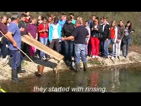 Gold panning on river Drava