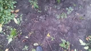 Мои собаки нашли монеты