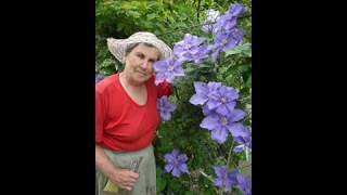 Когда сажать и пересаживать многолетние цветы