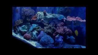 Marine Aquarium Tank Tour