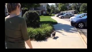 Cincinnati Dog Trainer Obedience Training At The Dog Wizard Academy