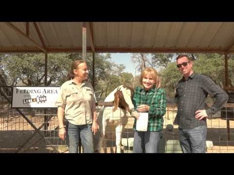 A Day at the Austin Zoo with Lone Star School Of Music