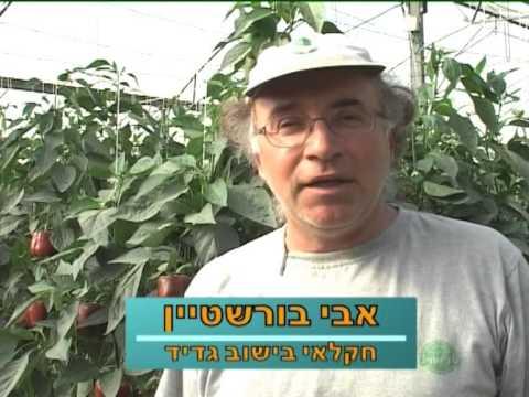 גוש קטיף- פרק בסיפור ישראלי