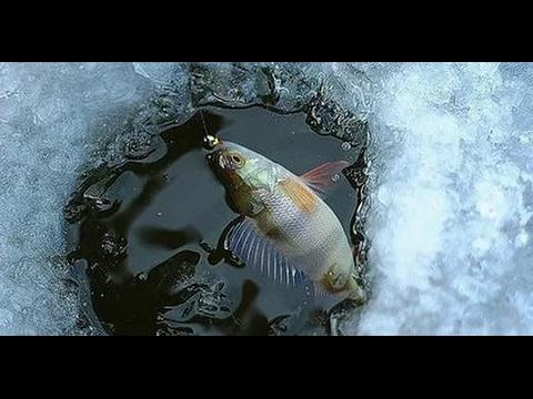 Пробная рыбалка на реке Чулым на  зимние удочки