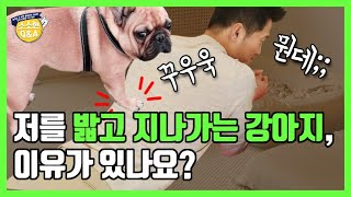 [Eng sub]Is there a reason my dog steps on me when passing me?|Kang Hyong Wook's Q&A