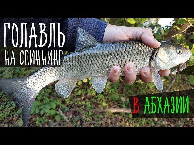 Голавль на спиннинг. Рыбалка в Абхазии. Октябрь 2017: Рыболовный дневник