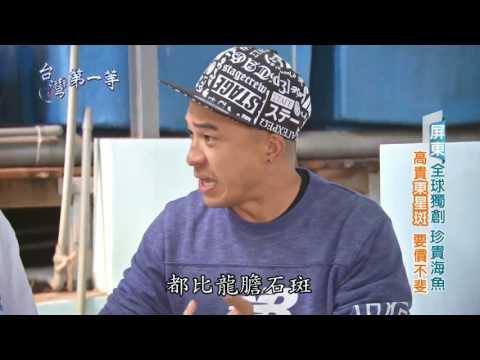 """八大台灣第一等HD  全球獨創""""免換水養殖"""",萬元身價「東星斑」、美味一極棒~"""