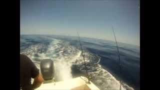 Catching Mahi Mahi Offshore Charleston Sc