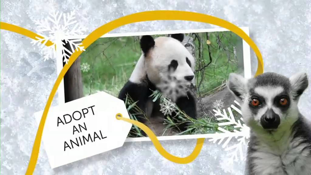 rzss edinburgh zoo great gifts for a good cause