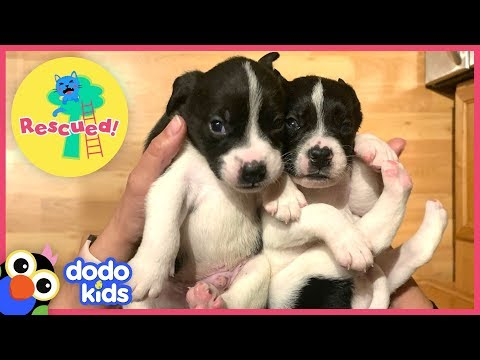 Cutest Little Puppies Rescued Out Of Cardboard Box | Animal Videos For Kids | Dodo Kids