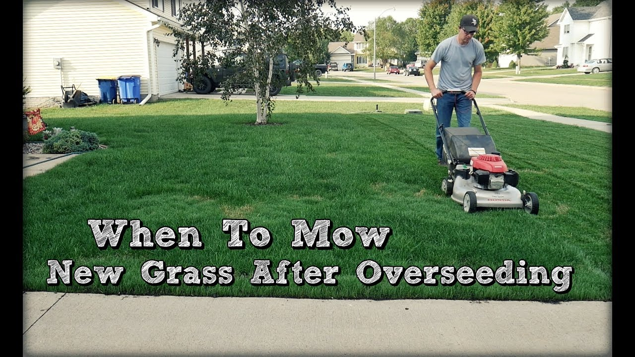 When To Mow New Gr After Overseeding