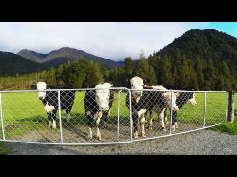 New Zealand (Video Journal)