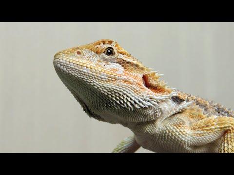 Вопрос: Какой на ваш взгляд самый красивый зверь?