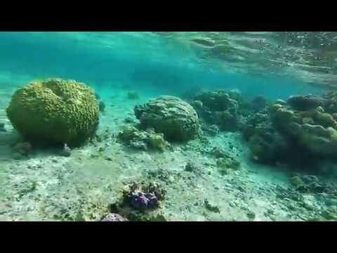 Snorkeling - Bora Bora - Society Islands, French Polynesia