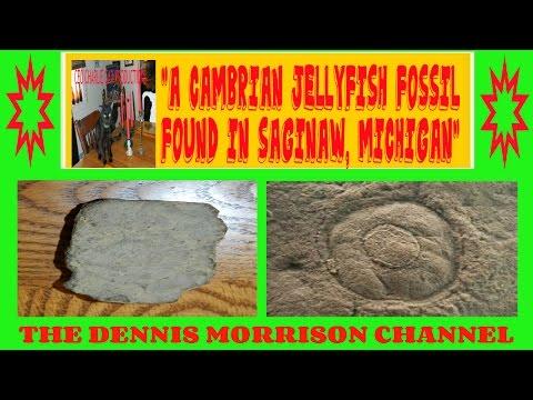 CAMBRIAN JELLYFISH FOSSIL FROM SAGINAW, MICHIGAN
