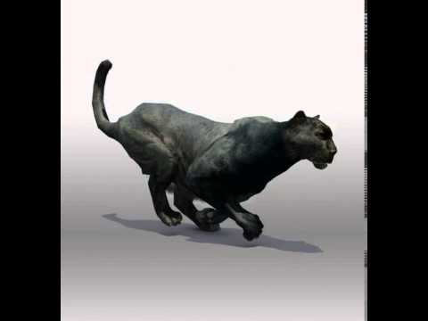 Black Panther 3D Model From CGTrader