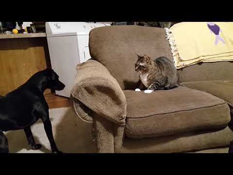 Cats Keep Dog Away From Her Ball
