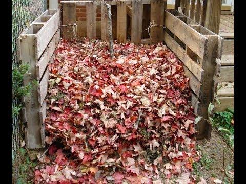 Опавшие листья как я использую их. Переработка опавших листьев