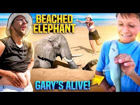 Gary the Shark