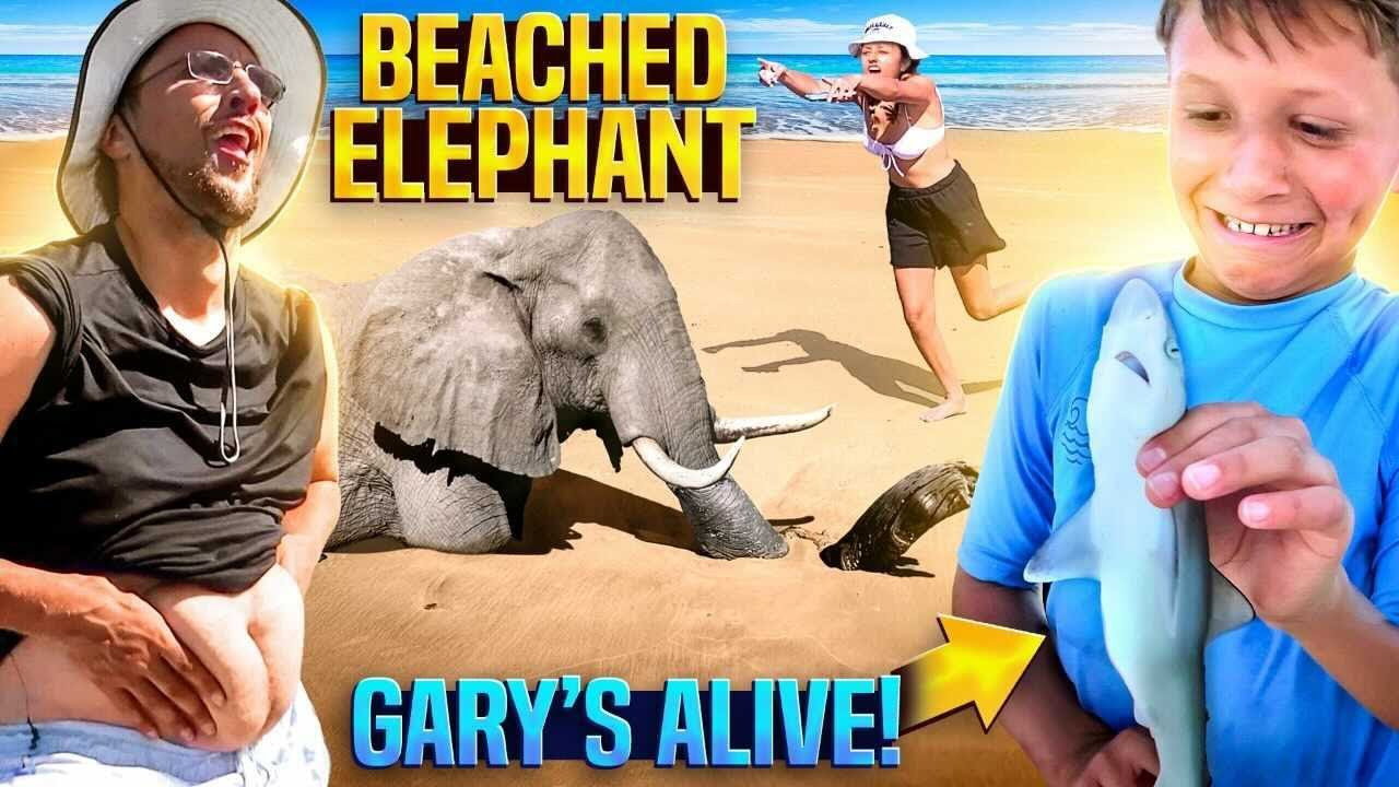Gary the Shark is Back! + Music Video 🎵 (FV Family Capers Island Vlog)