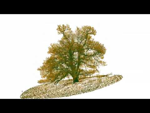 BBC to film a year in the life of an oak tree - Winter 14 - Terrestrial laser scanning and Forestry