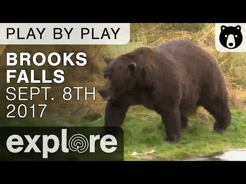 Brook Falls 10 - Katmai National Park - Play By Play