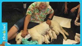 Service dog gives birth at International Airport