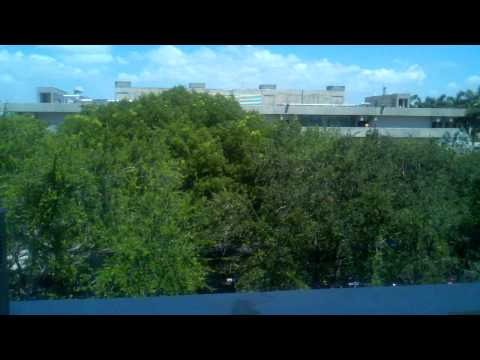 View from Office: University of Miami