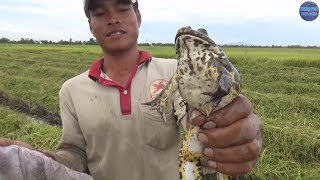 Anh nông dân làm 100 công lúa hôm nào cũng đi xiệt cá ở miền tây/electric shock fishing