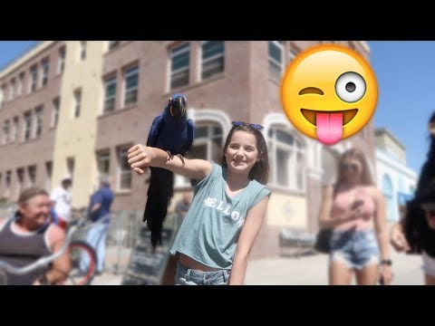 Crazy Things Happen at Venice Beach 😜 (WK 337.2) | Bratayley