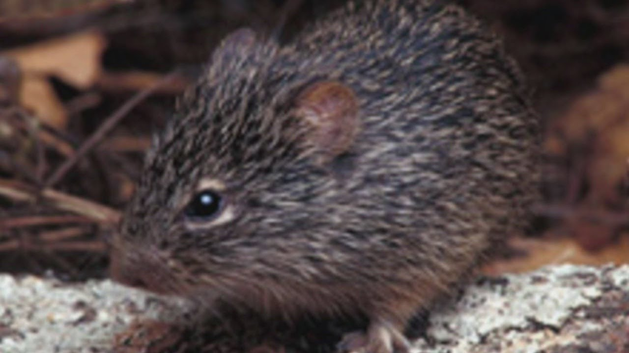 27-year-old mom dies after contracting rare rodent-borne virus ...