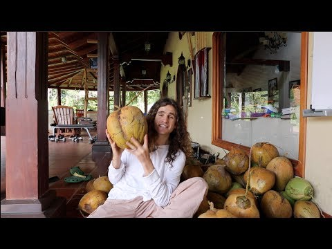 The Largest Coconut in the World! Superfood