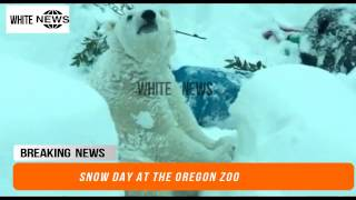 Snow day at the Oregon Zoo