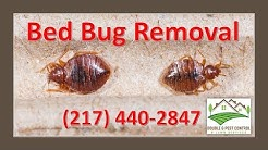 Bed Bug Removal Palmyra Missouri