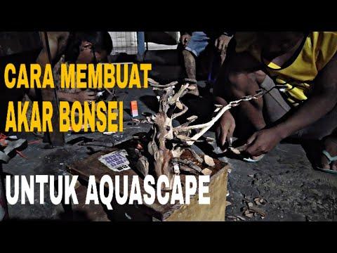 cara-membuat-akar-bonsai-untuk-aquascape