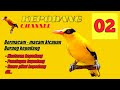 Kepodang Gacor Cocok Buat Masteran Kepodang Yang Malas Bunyi Dan Macet Bunyi  Mp3 - Mp4 Download