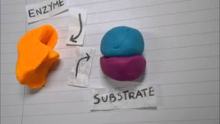 Video Enzyme Basics Stop Motion HD download MP3, 3GP, MP4, WEBM, AVI, FLV Agustus 2018