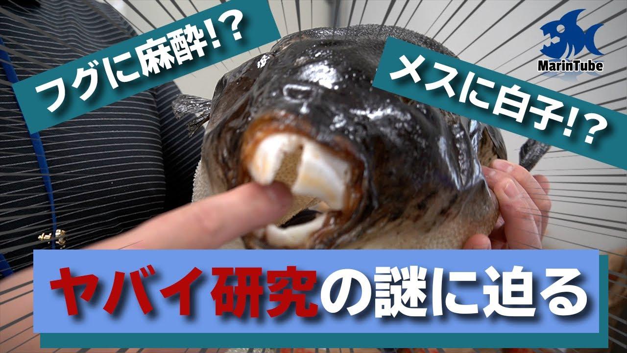 (後編)海の不思議がいっぱい!海と魚の最先端研究施設に突撃取材!【海洋研究取材#1】