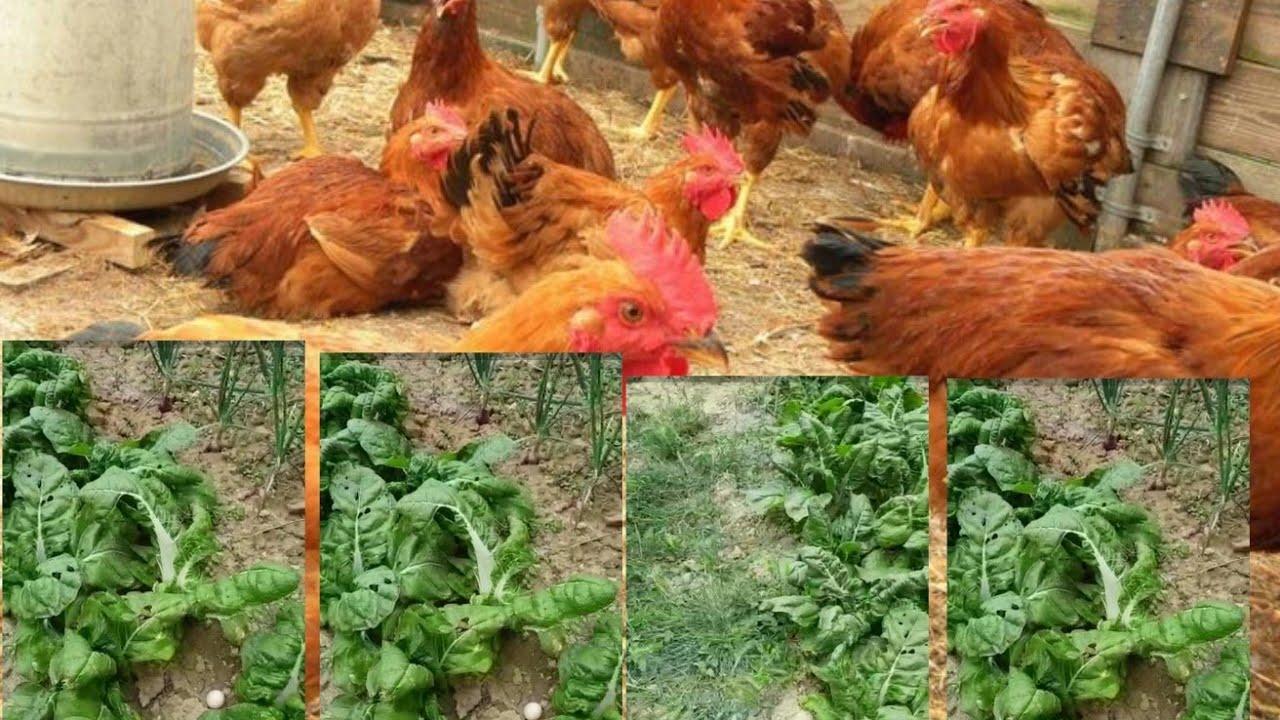 My Little Farms