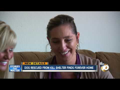 Dog rescued from kill shelter finds forever home