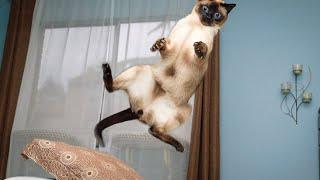 Забавные Кошки!  Веселая Видео Подборка 2015/ №11