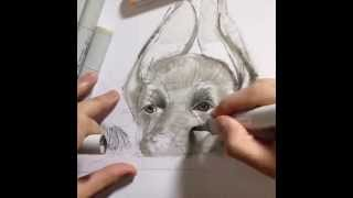 Speed Drawing/time Lapse Copic Markers - German Shepherd Puppy