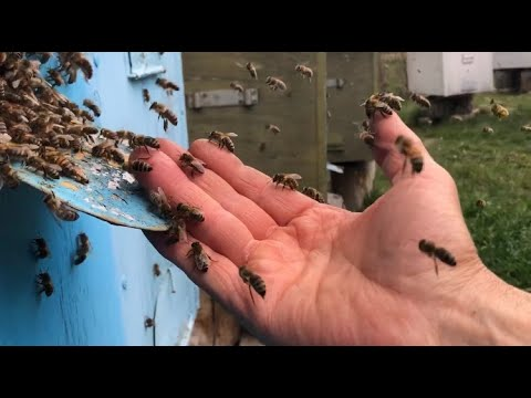 Жизнь пчел в улье | Макросъемка