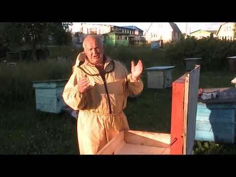 Вопрос: Как распознать пчелиную матку?