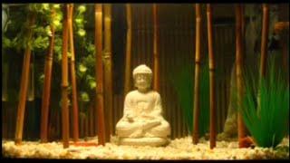 Bamboo Jungle Betta Tank