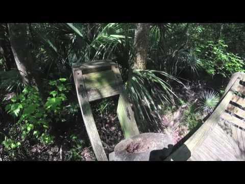 True Travel Tips - Tampa, Morris Bridge State Park