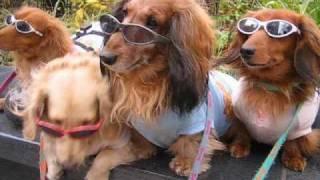 サングラスをカッコよく決めている犬がおりました。