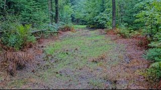 Logging Road Food Plots - 3 Week Growth Update