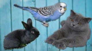 Попугай, Кролик и Кот! В одной Квартире!