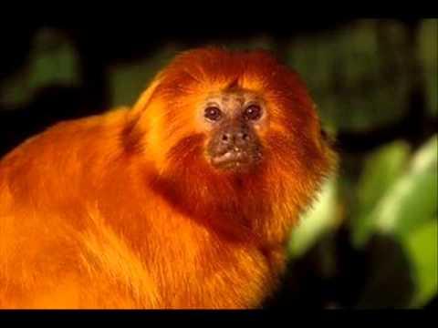 projeto animais em extinção 2011 wmv youtube